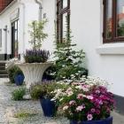 kleiner Vorgarten in Lønstrup