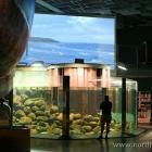 der neue Eingangsbereich im Nordsømuseet