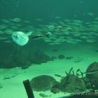 Ein Blick ins große Aquarium