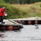 Robbenfütterung