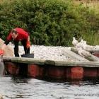 Robbenfütterung.... jeder kriegt was ab. ;)