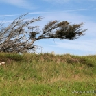 schiefer Baum bei Maarup Kirke
