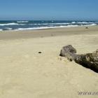 Strand und Strandgut