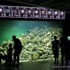 kleineres Aquarium im Nordseemuseum