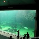 Das große Aquarium in Nordseemuseum