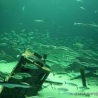 Fischschwärme