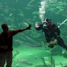 Taucher im Aquarium