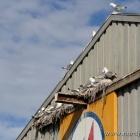 besiedelte Lagerhalle im Hafen von Hirtshals