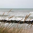 Lonstrup Strand Strandhafer