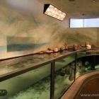 Aquarium im Kattegatcenter