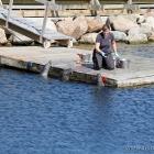 Robbenfütterung im Kattegatcenter