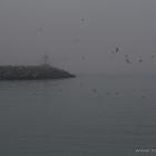 Mole Nebel