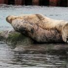 Robbe Oceanarium