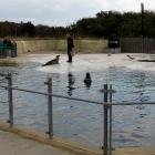 Robbenfütterung Fischereimuseeum