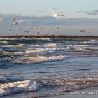 Wellen und Möwen