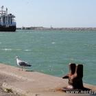 Möwe und Trawler