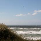 Strandhafer und Meer
