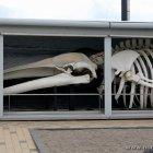 Wal im Oceanarium